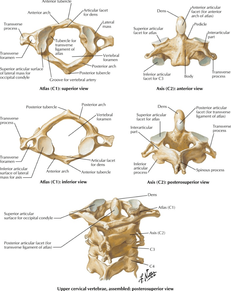 medium resolution of all the cervical spine anatomy diagrams are credited to agur amr dalley af of grant s atlas of anatomy twelfth edition