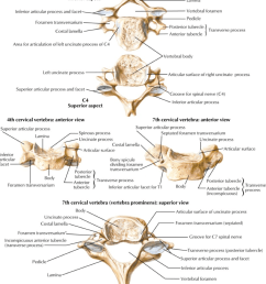 all the cervical spine anatomy diagrams are credited to agur amr dalley af of grant s atlas of anatomy twelfth edition  [ 900 x 1141 Pixel ]