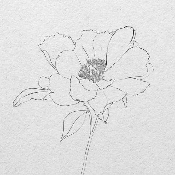 How to draw a realistic flower sketch - pencil or iPad — Vanessa ...