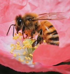 Virtual E-STEM distance learning program about bees aligns with the NGSS  for grades K-12 — Planet Bee Foundation [ 808 x 1000 Pixel ]