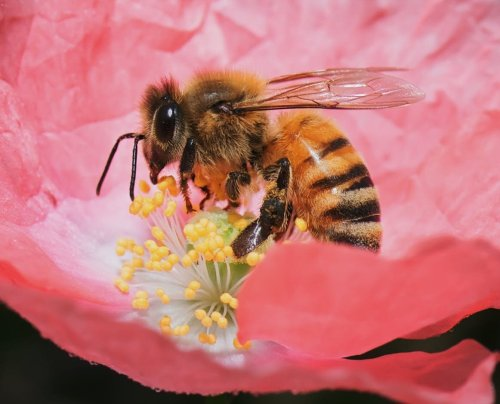 small resolution of Virtual E-STEM distance learning program about bees aligns with the NGSS  for grades K-12 — Planet Bee Foundation