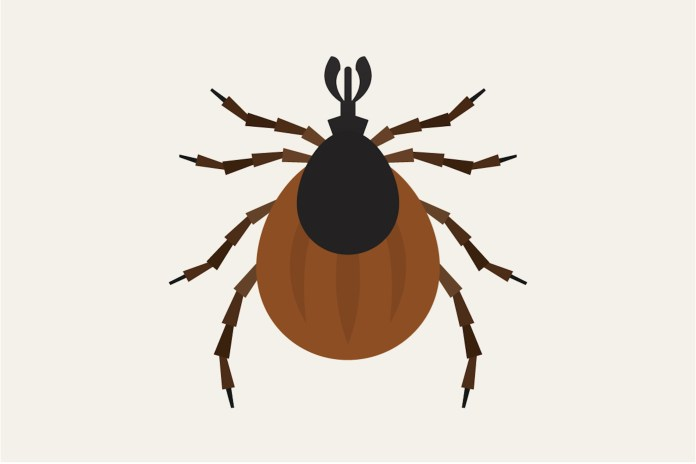 Deer tick populations are growing due to a warm winter in Connecticut. Residents must be cautious to avoid Lyme disease, as well as the deadly Powassan virus.(Photo courtesy to   http://insightpestsolutions.com/  )
