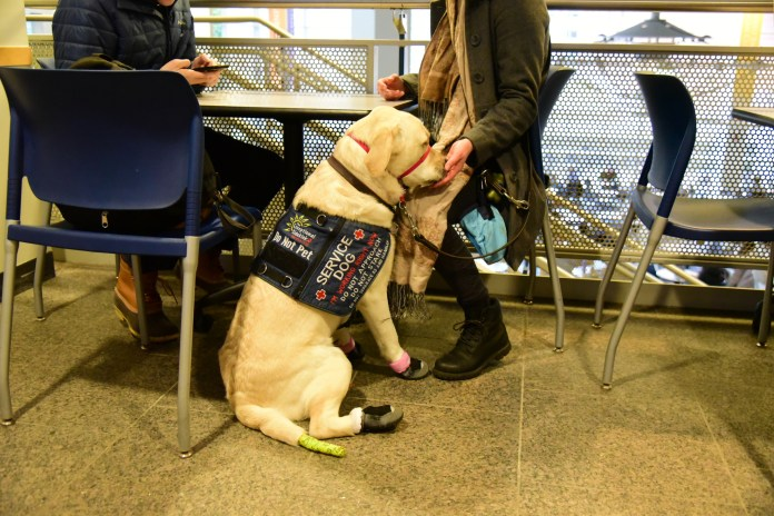 Pictures of the team of Becky and Luna the service dog during the interview (Kush Kumar/The Daily Campus)