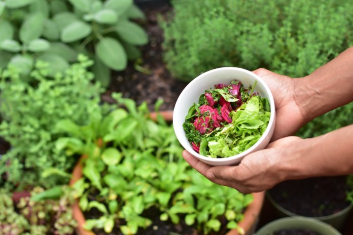 Bored during quarantine? Consider starting your very own garden.  Photo by    elias morr    on    Unsplash   . Thumbnail photo courtesy of    Neslihan Gunaydin    on    Unsplash   .