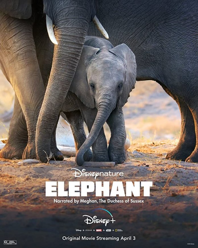"""One of the newest additions to Disney+, """"Elephants,"""" shows the powerful journey of a herd of elephants traveling to the Zambezi River. The movie is narrated by Megan Markle, the Duchess of Sussex.  Photo via IMDb.com"""
