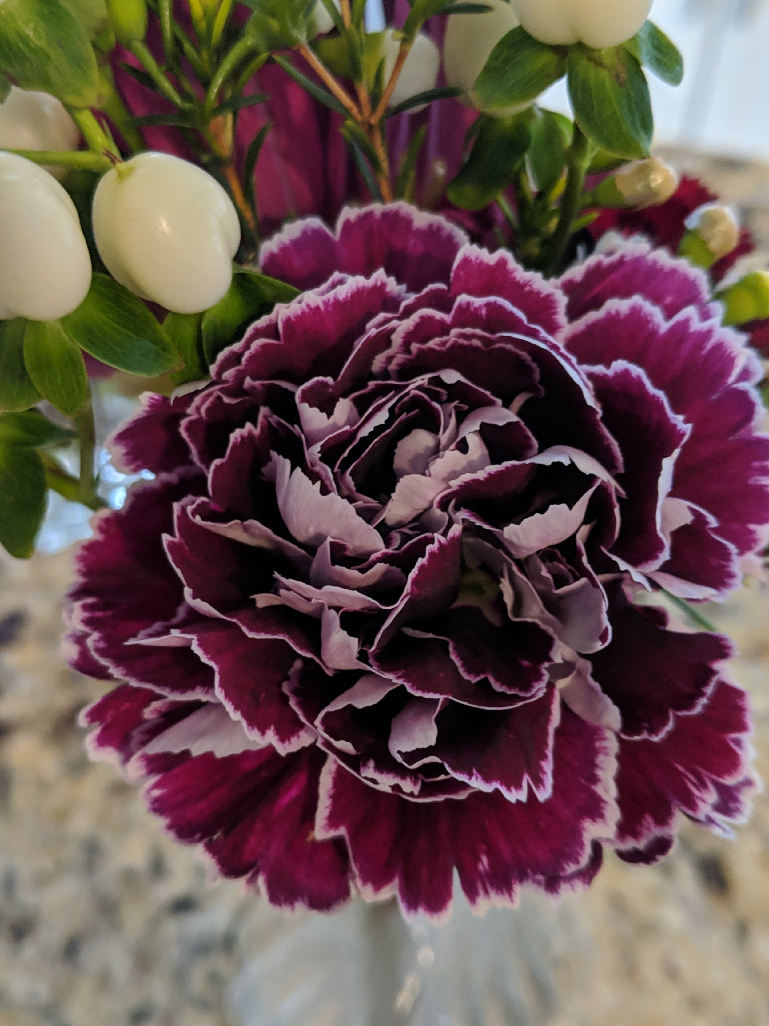10 Different Types of Carnations (Everything You Need To