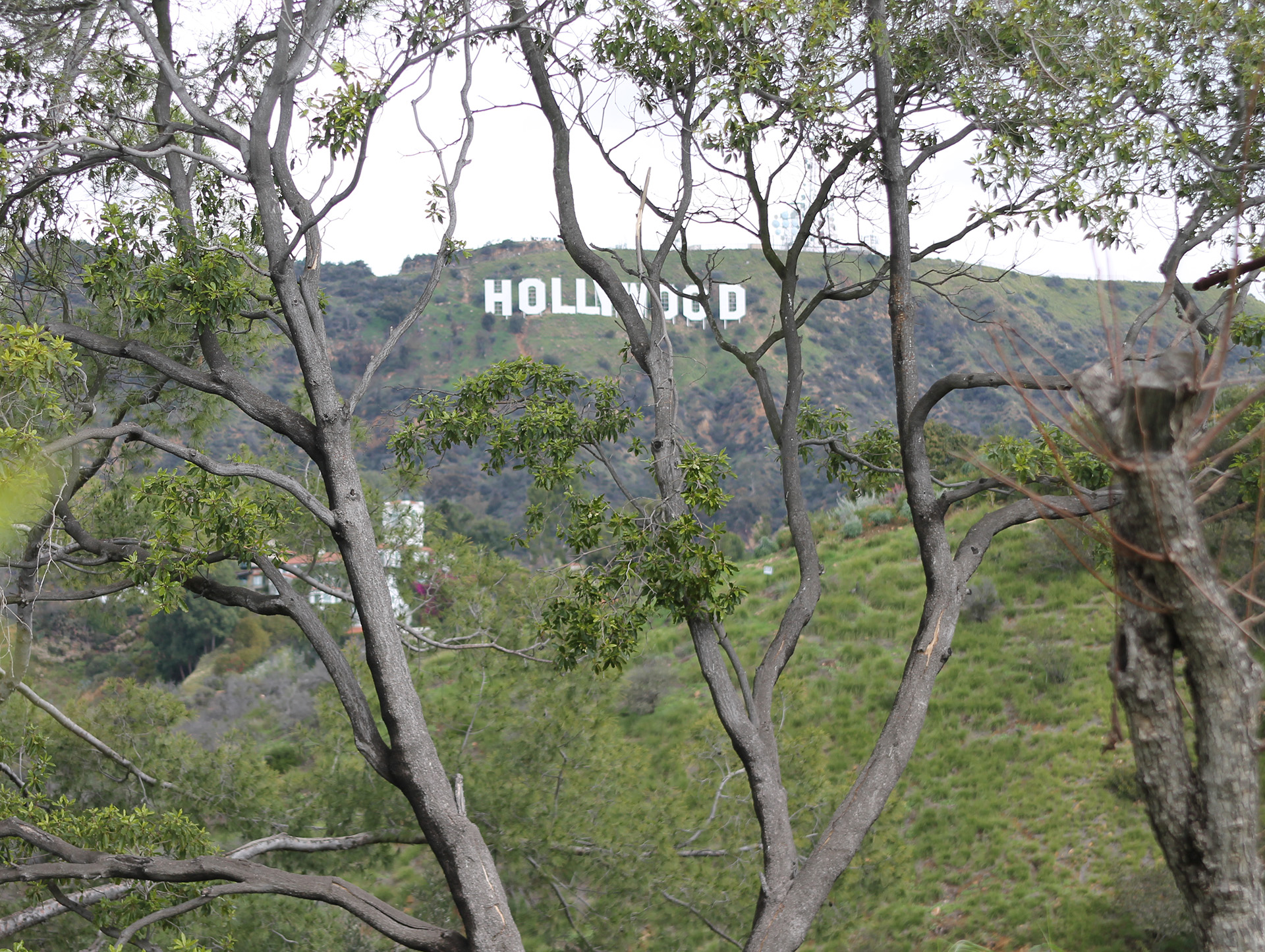 small resolution of hollywood sign martin pierce jpg