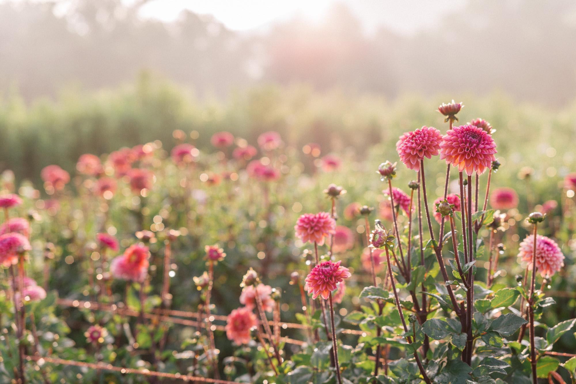 flourish flower farm boutique