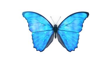 Hagleitner Werte-Schmetterling — RAMMY.at | Martin Ramsauer | Mediendesign
