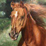 Arabian Horse Art Paint Horse Horse Paintings On Canvas Caroline Towning Horse Art Horse Paintings