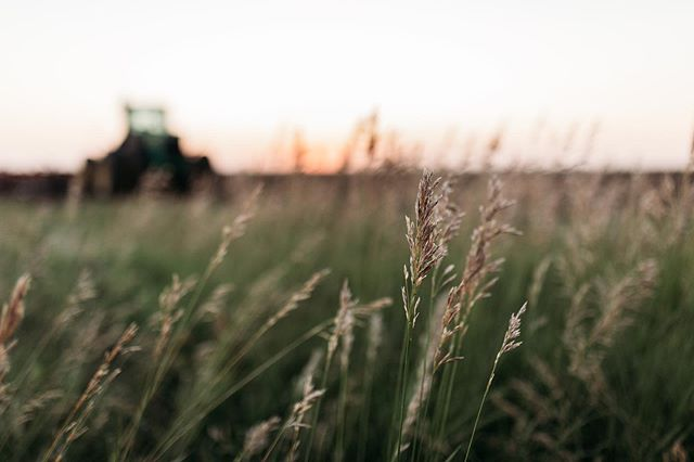 Thank goodness my grandpa humors me and pulls over when I see something I want to photograph. Love  Kansas wheat fields and sunsets ❤️ #kansasphotos #kansaswheat #kansaswheatfield