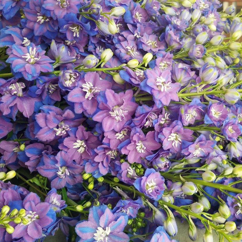 Urban Buds Flower Farm Best Flower Site