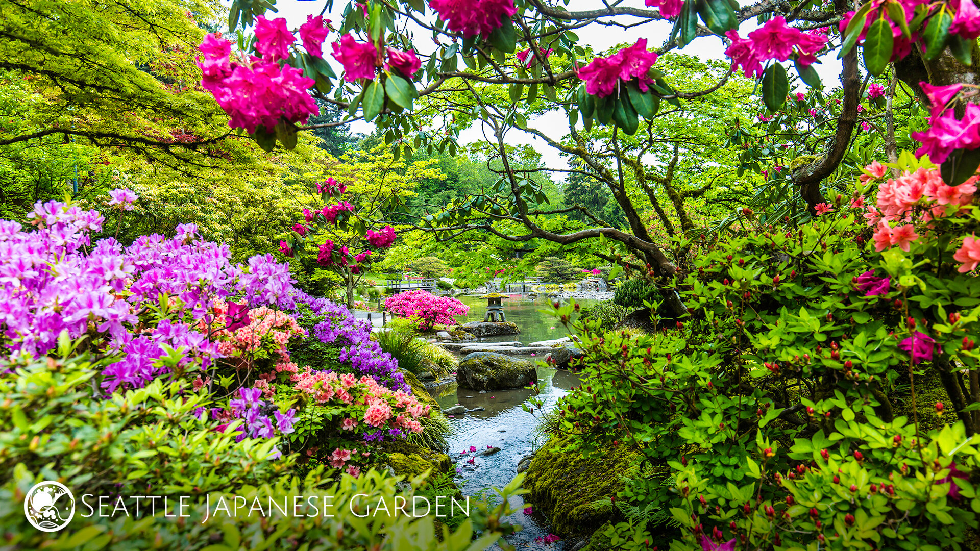 Seattle Japanese Garden Backgrounds Now Available For Video Conferences Seattle Japanese Garden