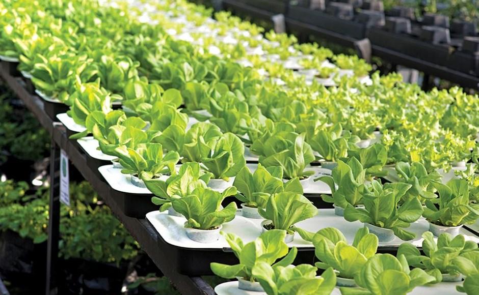 Grow Lettuce Indoors All Winter Igrow
