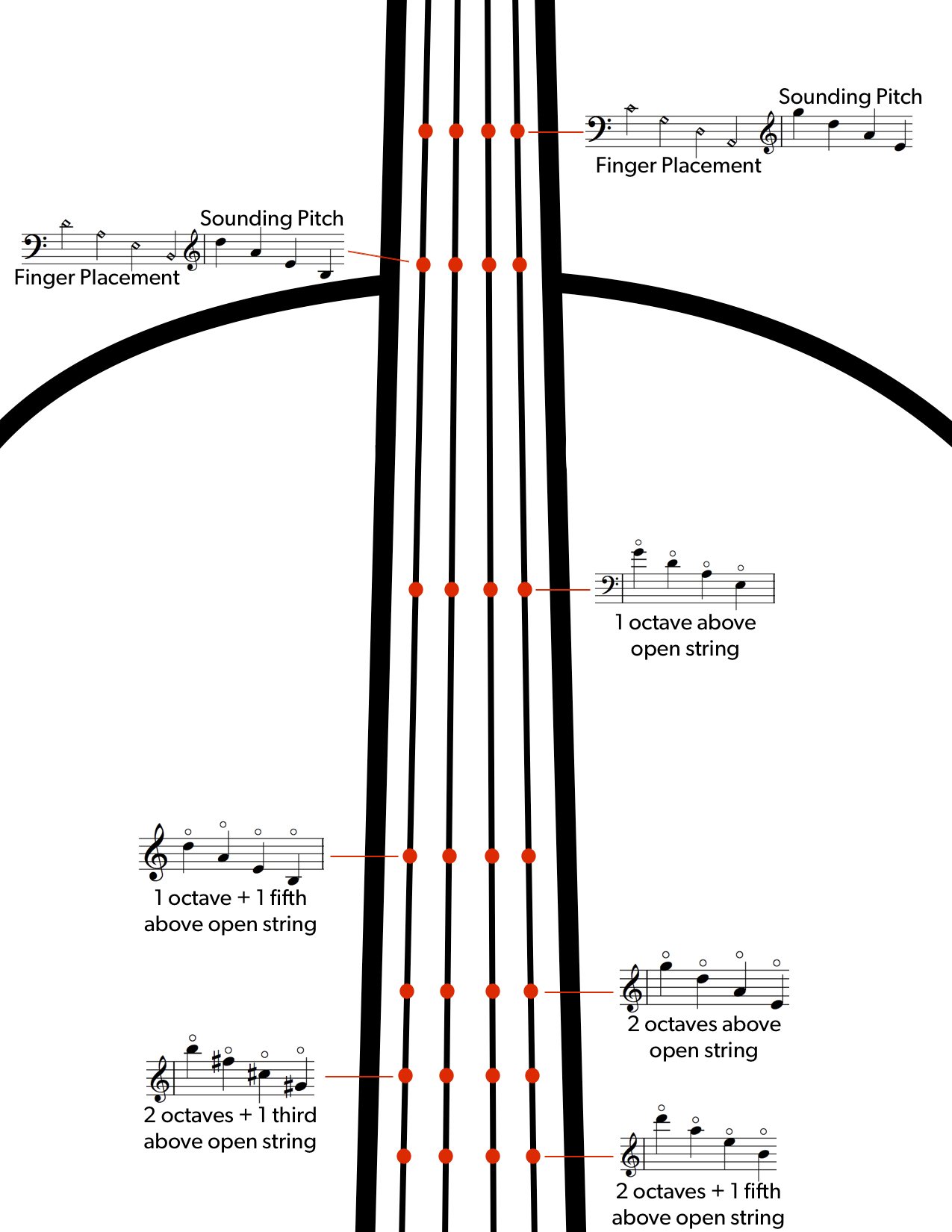 Double Bass Strings Notes : double, strings, notes, Double, Articulations, Markings, Guide, Discover