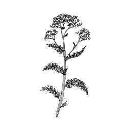 Black & white botanical collection Botanical illustration studio by Anna Farba