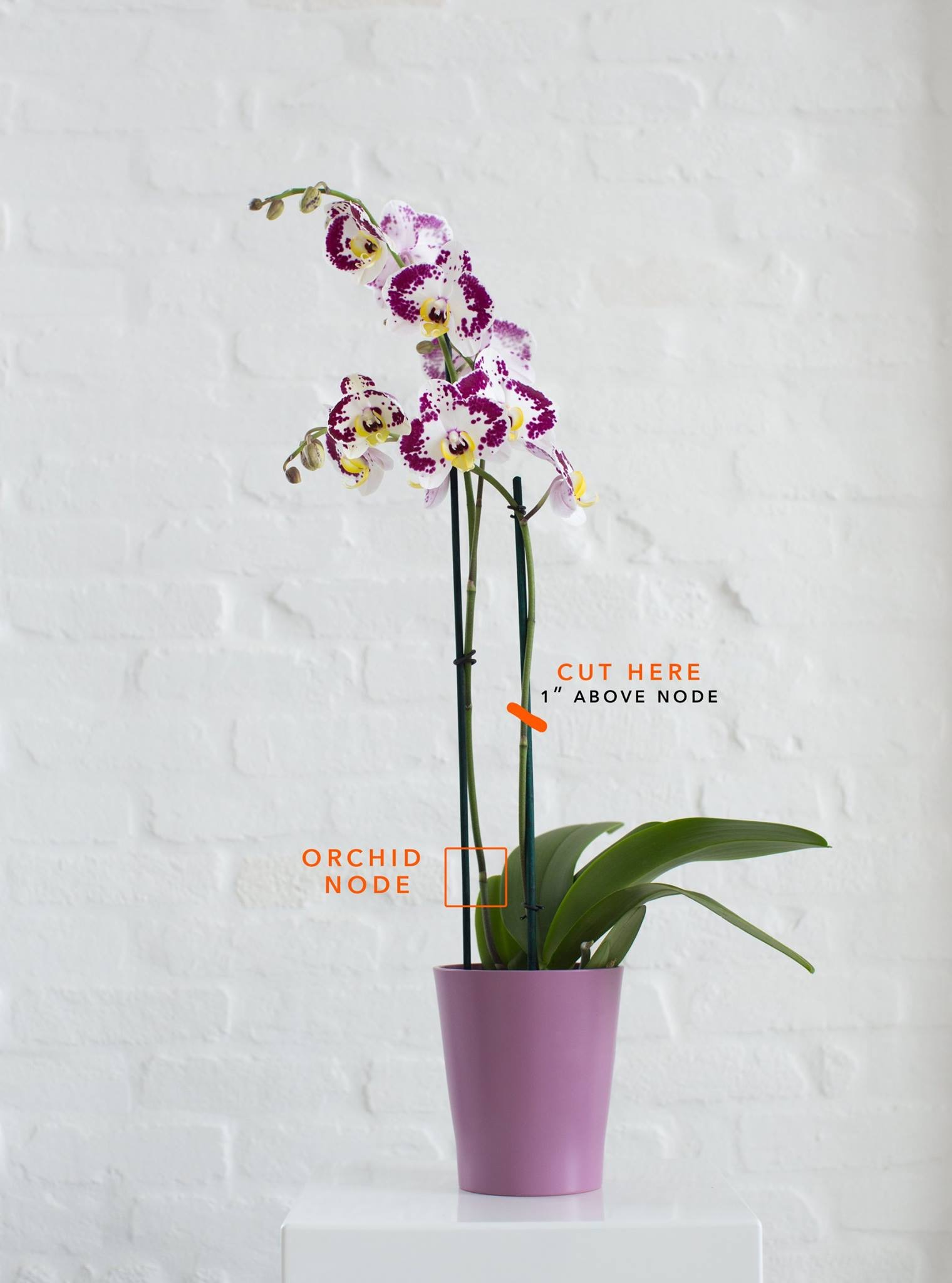 General Orchid Care Your Orchid Questions