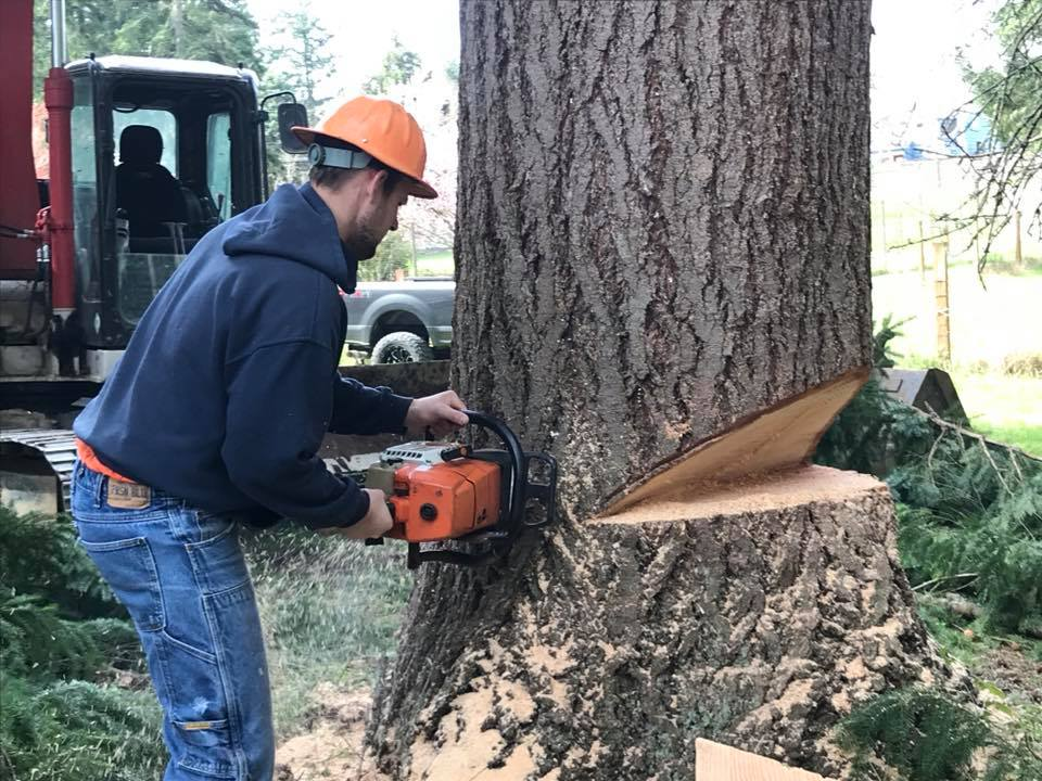 trees land clearing greentree