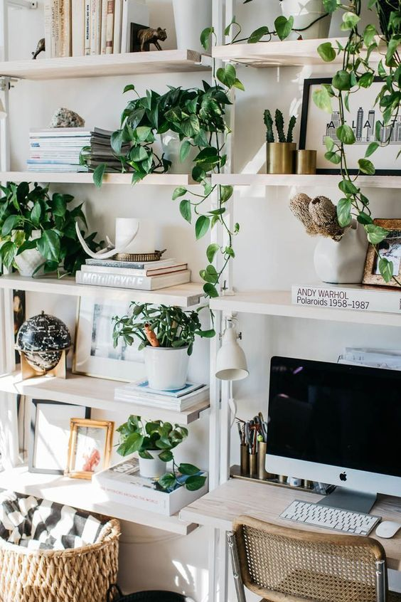 pothos plants office wfh desk
