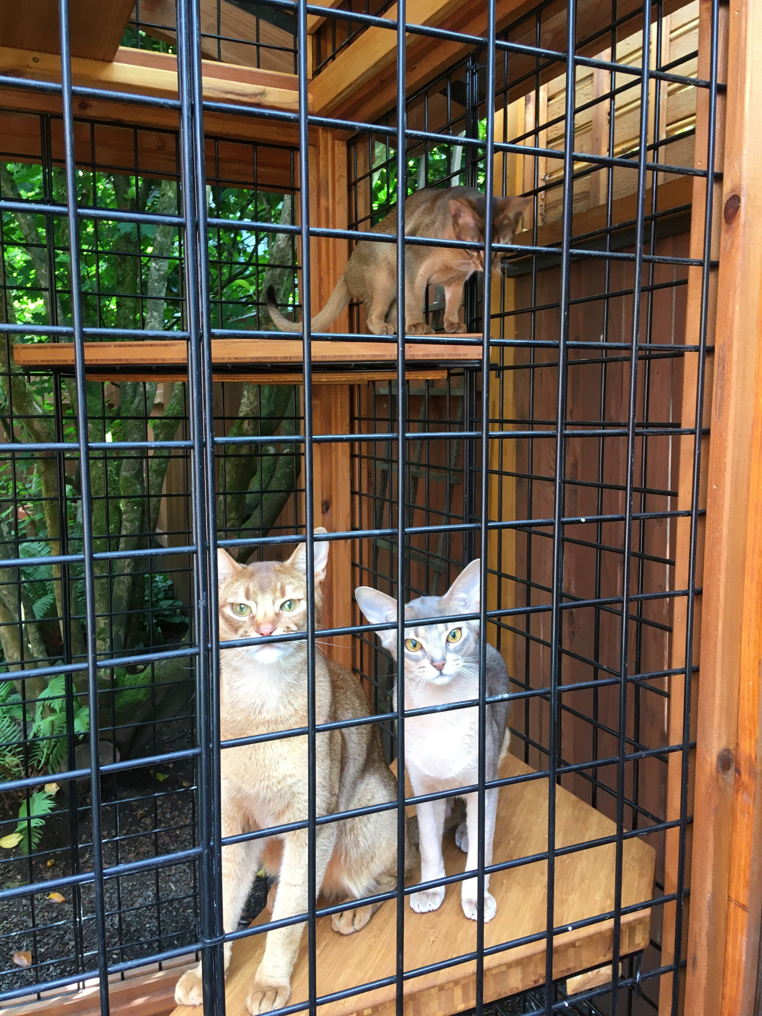 catio cats safe at home