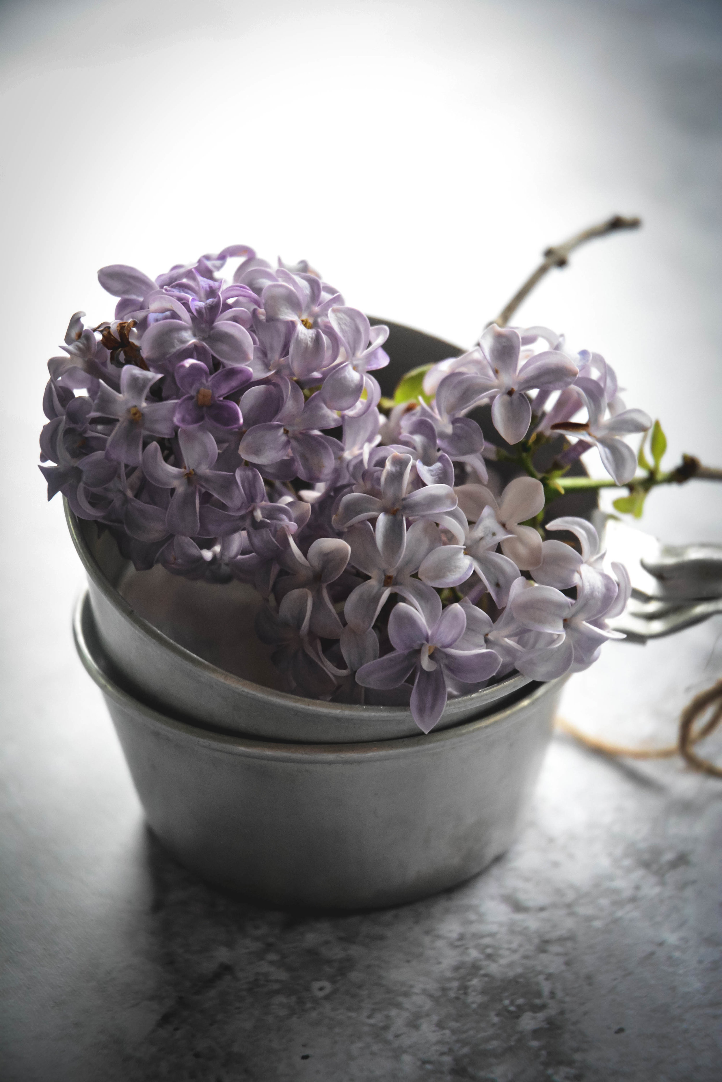 Lilac in measuring cups