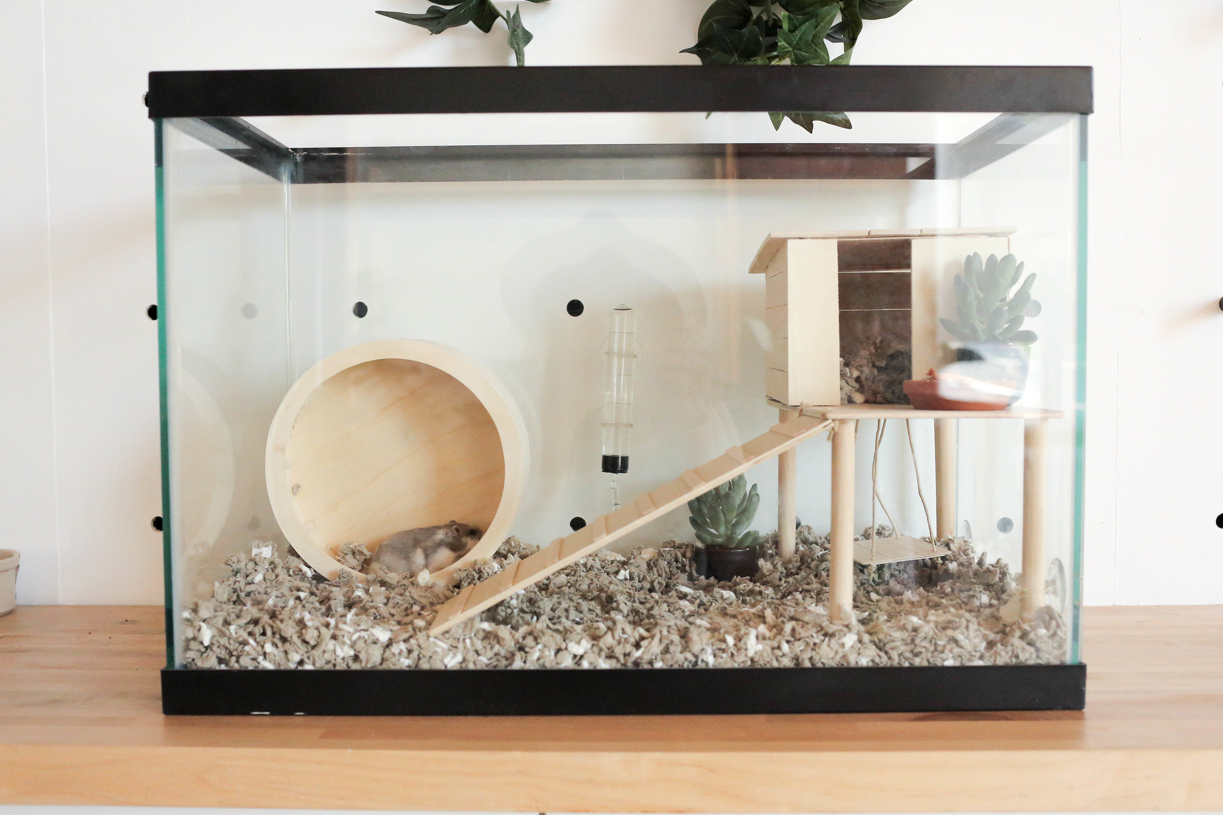 diy hamster cage the