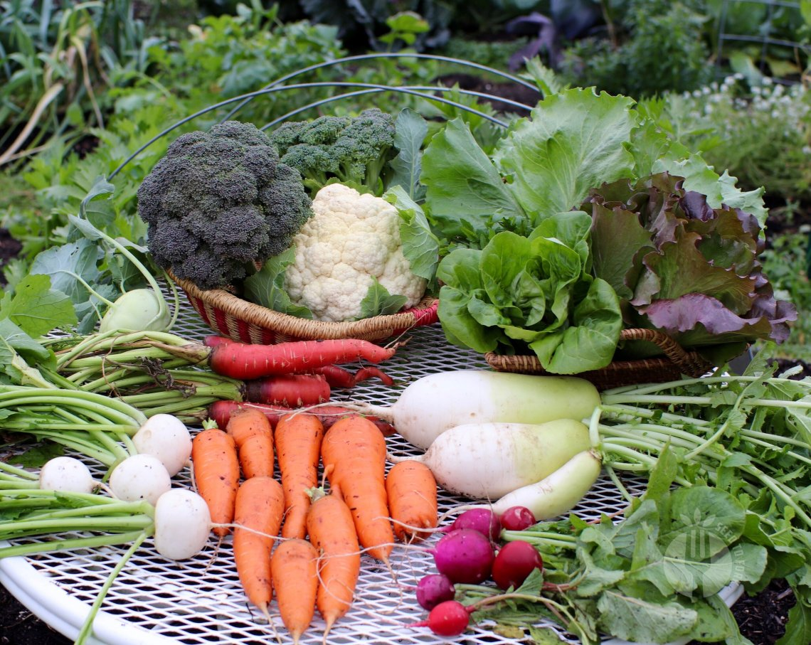 The Fall Garden Plan Part 1 Seed To Fork Blog By Meg Cowden