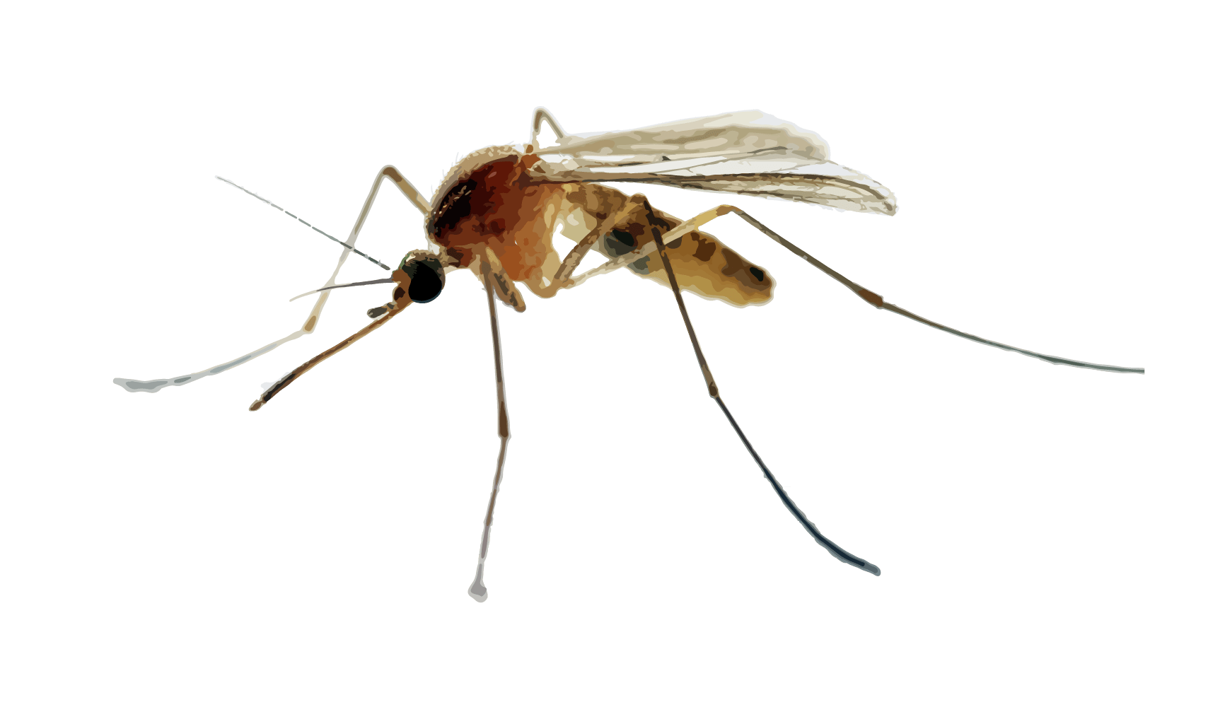 green mosquito control green