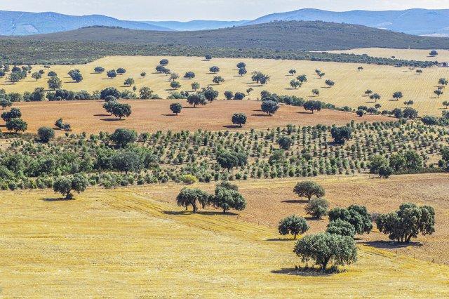 Los 15 Parques Nacionales de España - Cabañeros | Foto: Dreamstime