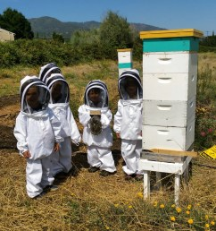 Kids \u0026 Bees — The Bee Girl Organization [ 1000 x 1000 Pixel ]