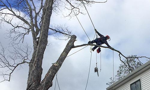mayfair tree care