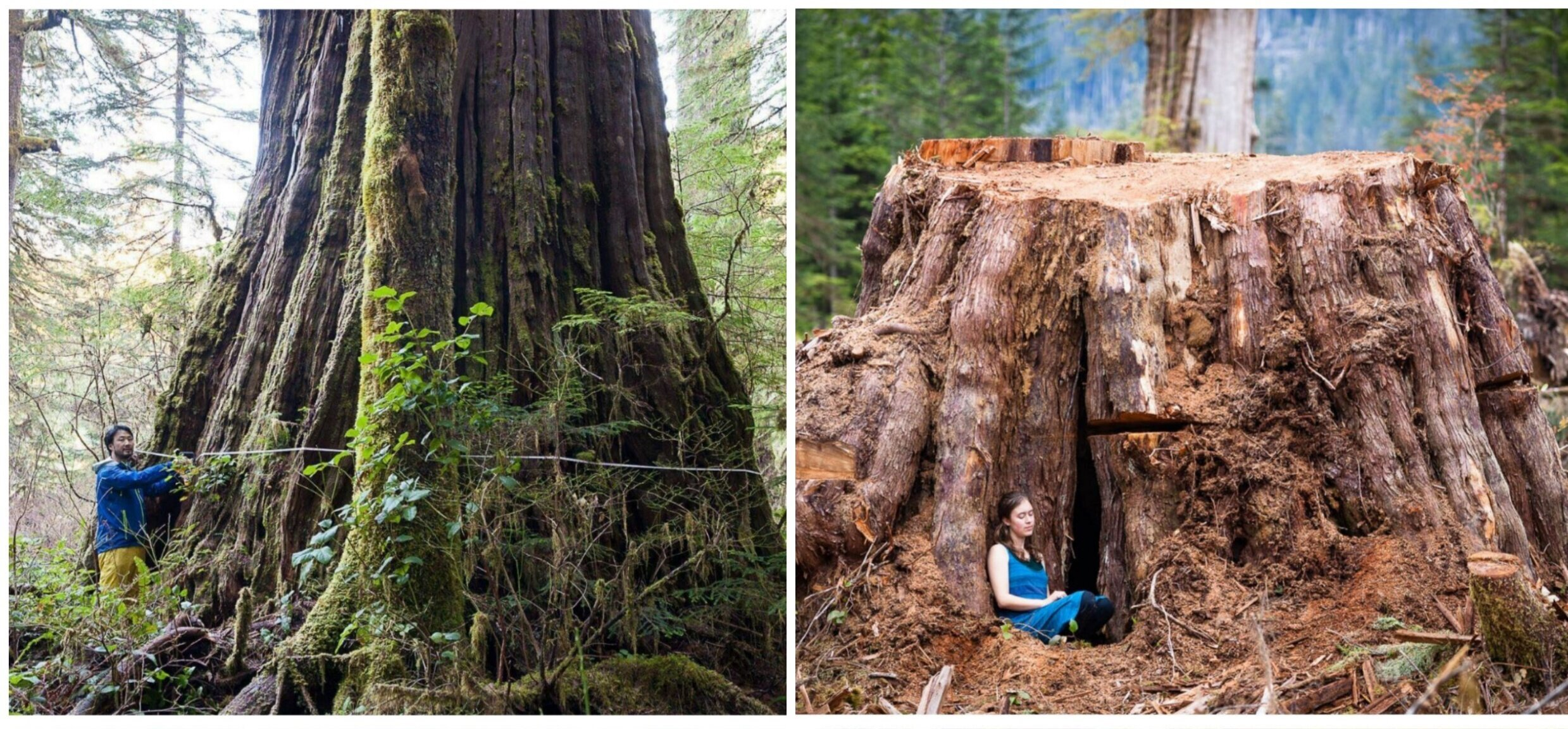 Temperate rainforest dynamics in coastal british columbia. Send A Message Protect Bc S Endangered Old Growth Forests Endangered Ecosystems Alliance