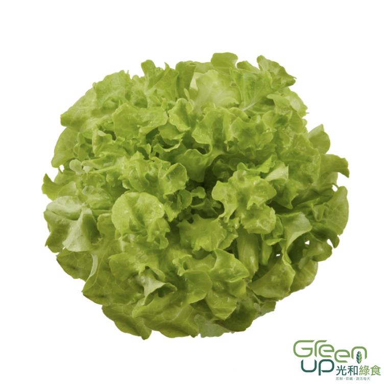 所有蔬菜 — 光和綠食