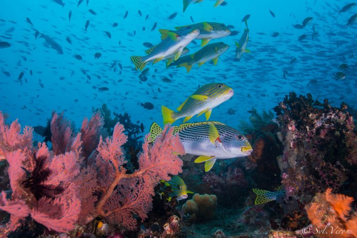 Https Www Diveandcruiseindonesia Com Destinations Scuba Diving Training And Trips In Indonesia
