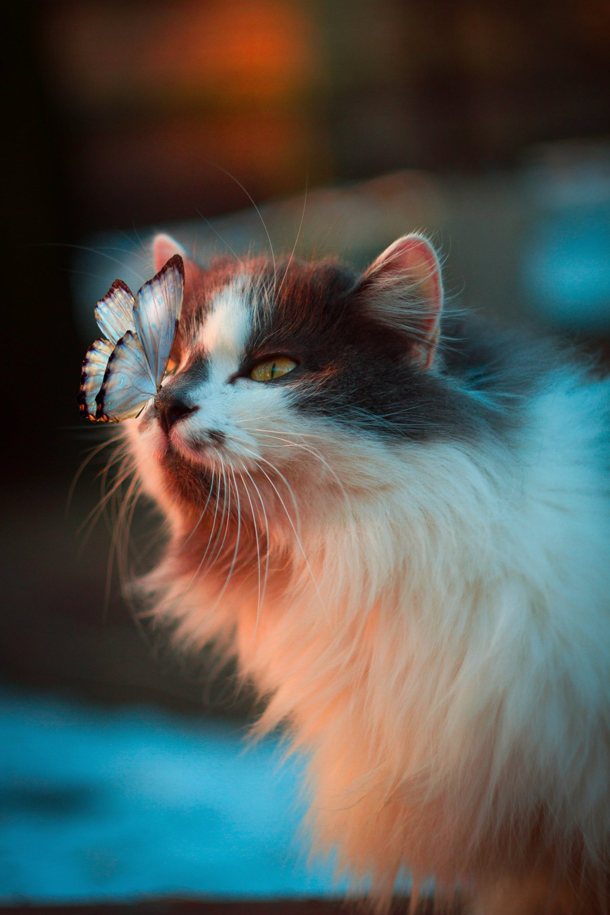 do norwegian forest cats shed a lot