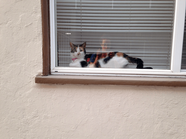 Indoor cats, like this one in the window, can feel fear, frustration, stress and boredom just like people, which is why it's important to provide enrichment activities which stimulate their environment.