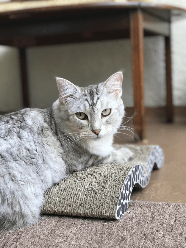 Cat-on-a-scratching-pad