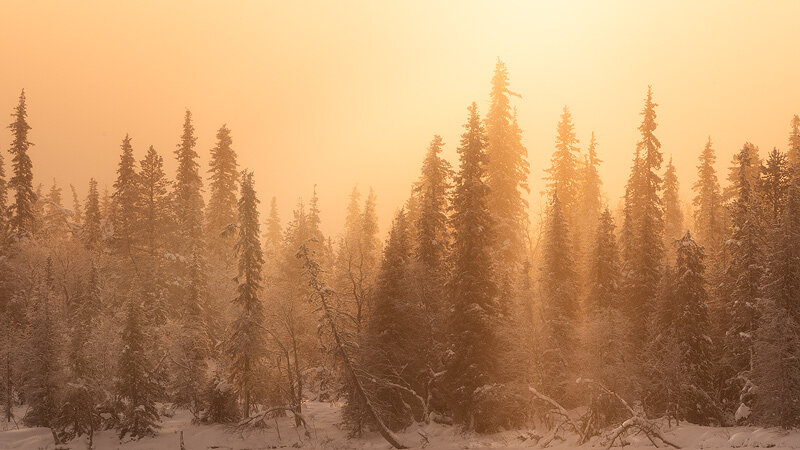 Forests and woodland areas are a unique and aesthetic subject for any eager landscape photographer to. The Dark Forest Landscape Photography By Daniel Laan