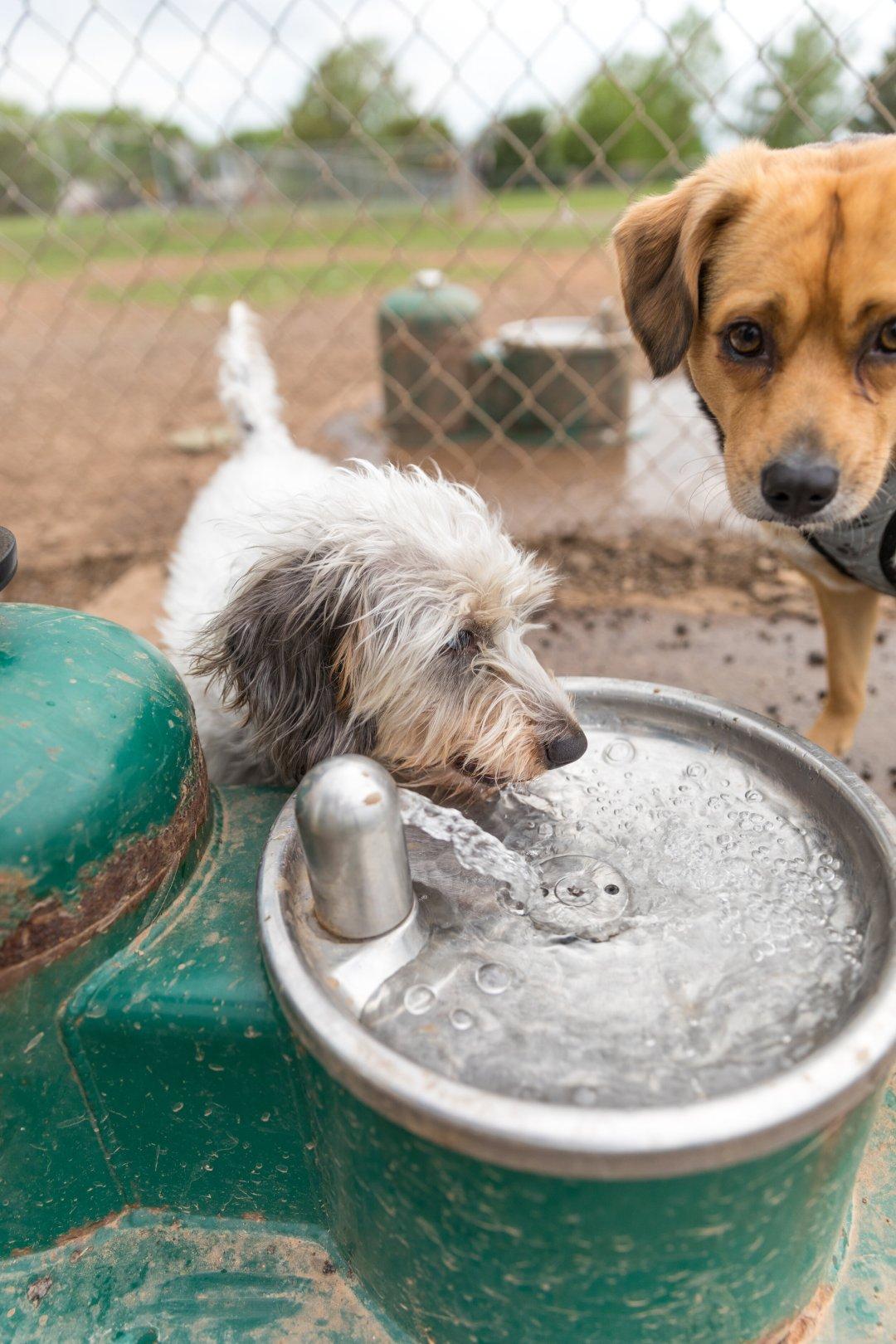 dog parks are not safe.jpg