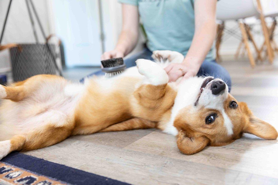 Keeping Dog Hair Under Control .jpg