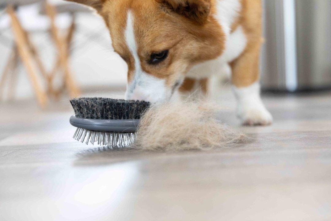Control Dog Hair In House.jpg