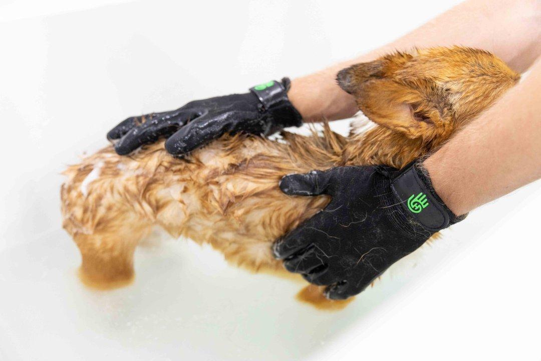 How Do You Control Dog Hair In The House.jpg