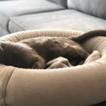 Cool Dog Beds Cute Cat Beds Unique Design Pawpawplay