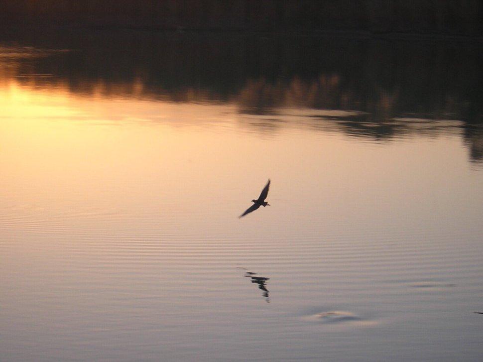 030917-sunrise-005-bird-on-water.jpg
