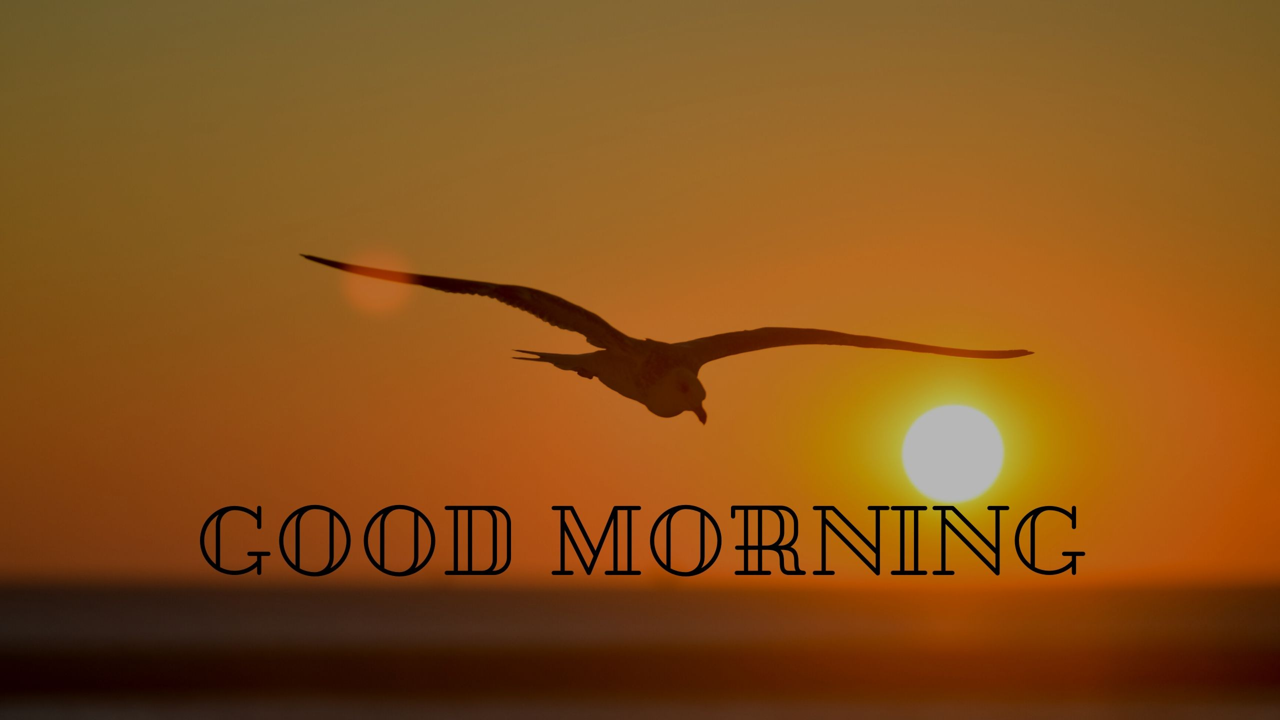 Good Morning Bird Flying Sun Rising Image full HD free download.