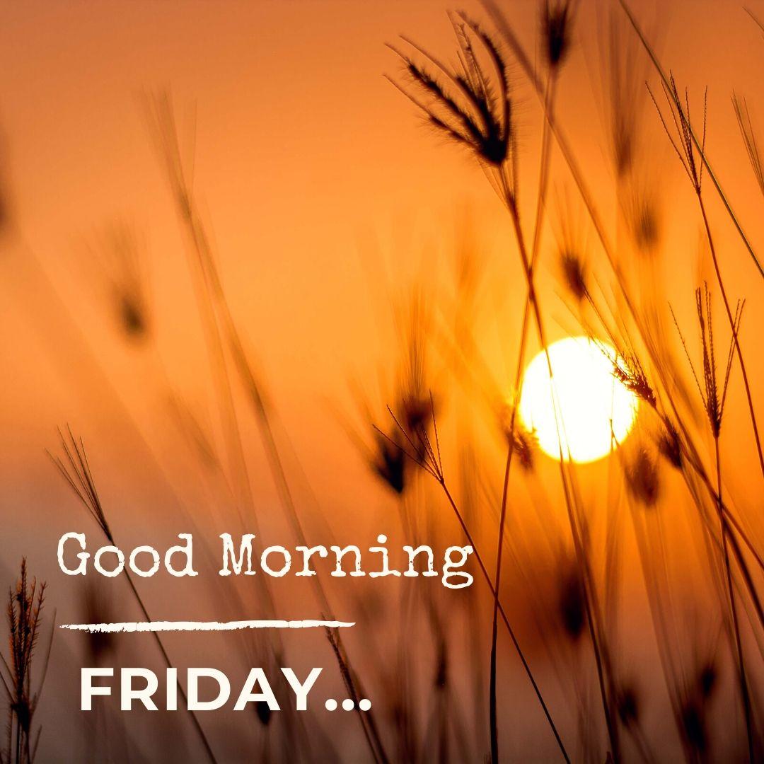 Good Morning Friday Image Hd 1 full HD free download.