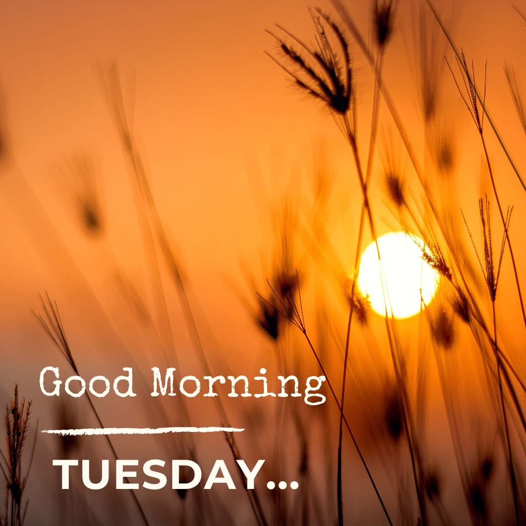 Good Morning Tuesday Image Hd 1 full HD free download.