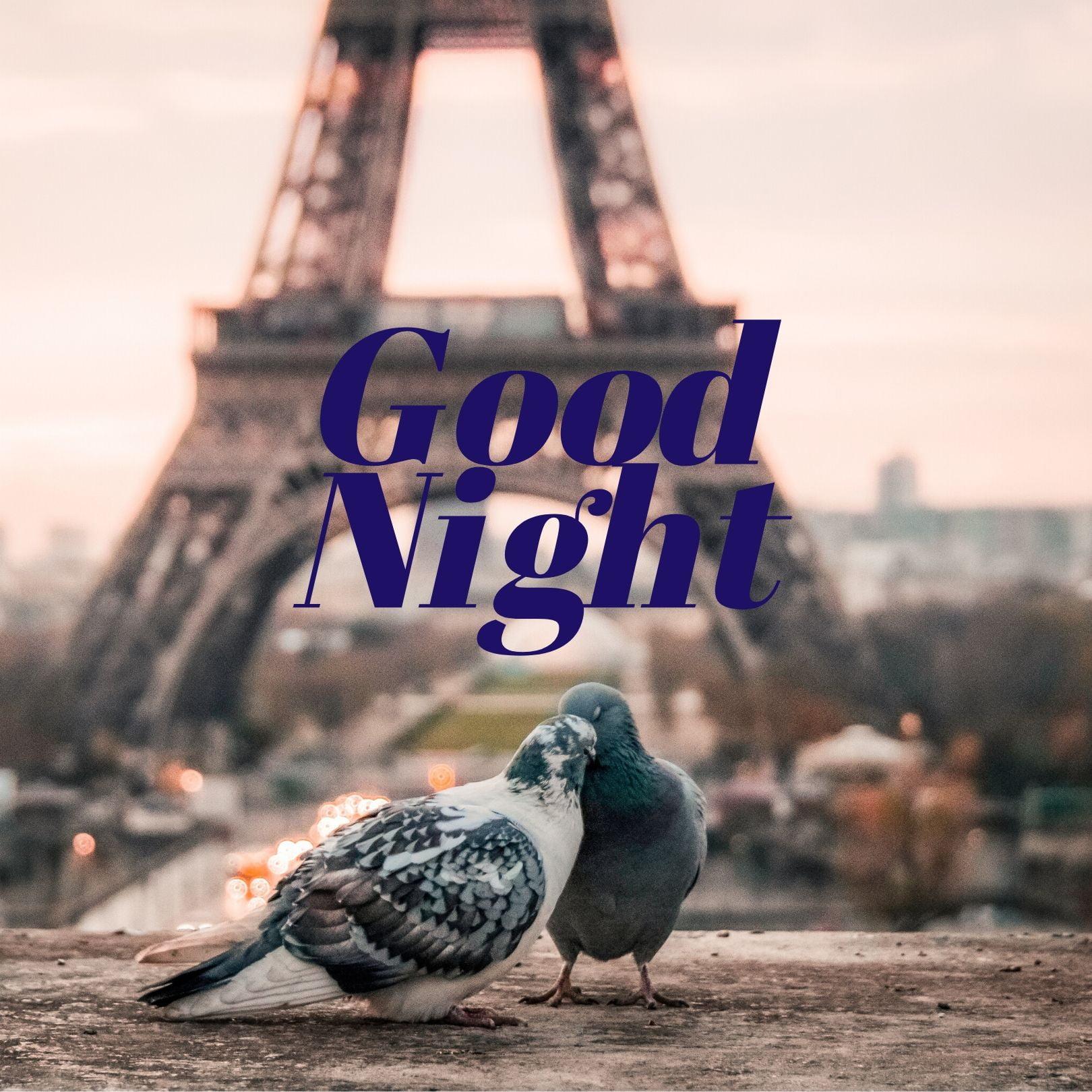 Good Night Love Birds full HD free download.