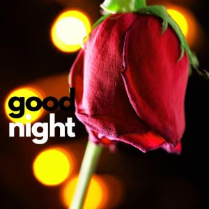 Good Night Rose image full HD free download.