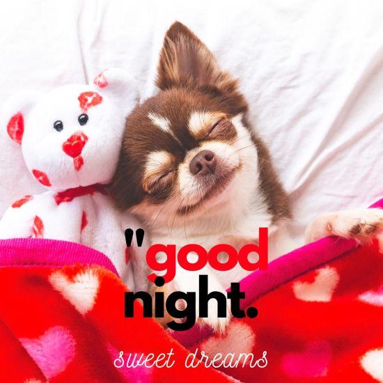 Good Night Sweet Dreams Cute Dog Image